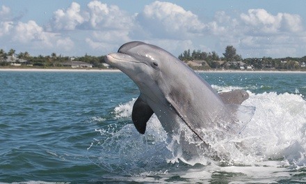 90-Minute Family Dolphin Adventure Boat Tour for One, Two, or Four from Fins Up Tours (Up to 54% Off)