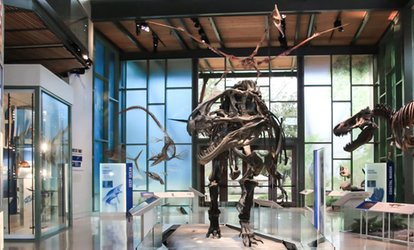 image for Admission for One, Two, or Four at Witte Museum (Up to 42% Off)