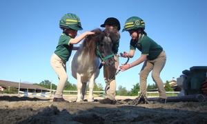 ASSOCIAZIONE SPORTIVA DILETTANTISTICA SCERE'E: 3, 5 o 7 lezioni di equitazione con pony da Scuderia Scerèe (sconto fino a 80%)