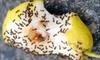 Bug Brigade - Lake Sylvan Estates: $35 for $150 Worth of Pest-Control Services from Bug Brigade