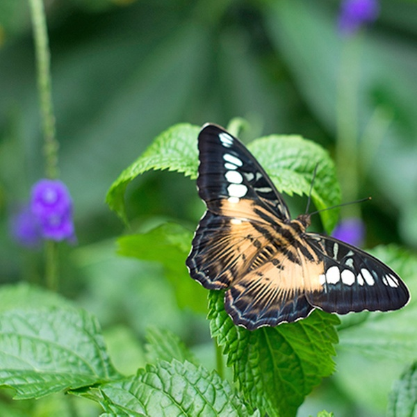 butterfly conservatory cambridge coupon code