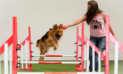 image for One or Two Indoor Dog Park Play Sessions with Drink at Action Petz Bridgend (Up to 64% Off)