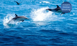 Bay Explorer: 8-Hr Bay of Plenty Cruise for 1 Child ($64), 1 Adult ($119) or Family of 4 ($330) with Bay Explorer (Up to $430 Value*)