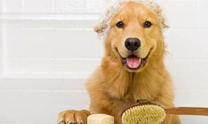The Happy Dog - Mobile Pet Grooming: $105 for $140 Worth of Services — The Happy Dog - Mobile Pet Grooming