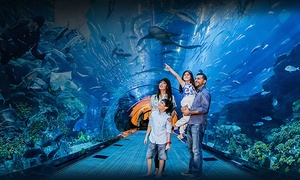 Smart Tourism: Dubai Mall Aquarium Entry, Underwater Zoo and Half-Day Dubai City Tour for Up to Four with Smart Tourism (Up to 46% Off)
