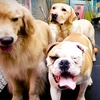 Up to 53% Off Dog Daycare Services