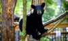Up to 35% Off Admission at Vince Shute Wildlife Sanctuary