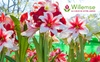 Willemse France: Graines, plantes, jardins, fleurs... :Un bon d'achat de 40 euros au prix de 19 euros à valoir sur le site Willemse
