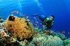 50% Off Certification - SCUBA / PADI