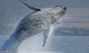 Captain John Whale Watching and Fishing Tours: $49 for a Fall Whale-Watching Tour for Two Adults from Capt. John Boats (Up to $94 Value)