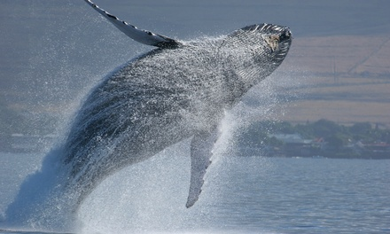 $49 for a Fall Whale-Watching Tour for Two Adults from Capt. John Boats (Up to $94 Value)