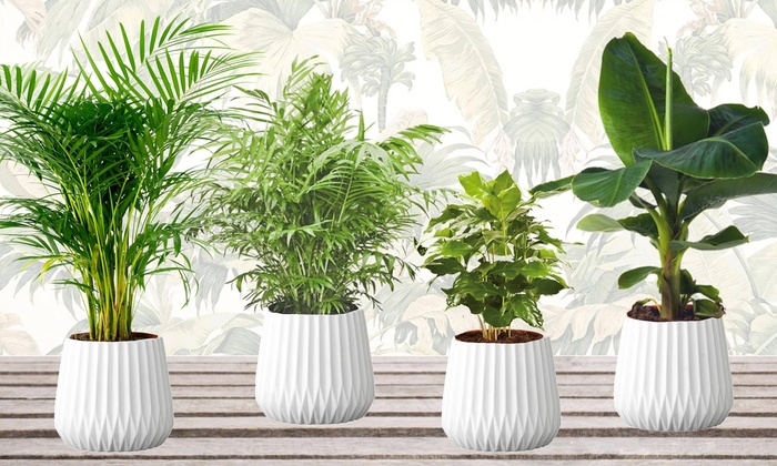set of four trendy indoor plants groupon goods. Black Bedroom Furniture Sets. Home Design Ideas
