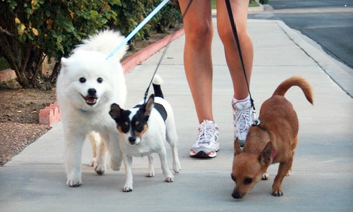 Parker and Friends Pet Sitting - Los Angeles: 2 or 5 Pet-Sitting Visits or Dog Walks, or Overnight Pet Sitting from Parker and Friends Pet Sitting (Up to 61% Off)