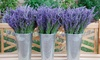 Up to 50% Off Admission to Red Rock Lavender Festival