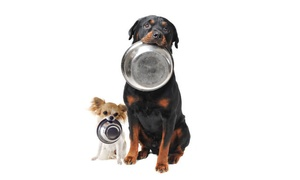 Argos, All-Natural Pet Food & Supply: $22 for $40 Worth of Argos' Fresh, All-Natural Pet Food, Any Formula -