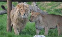 1 ou 2 entrées pour adultes etou enfants dès 7 € pour découvrir le Parc de lAuxois