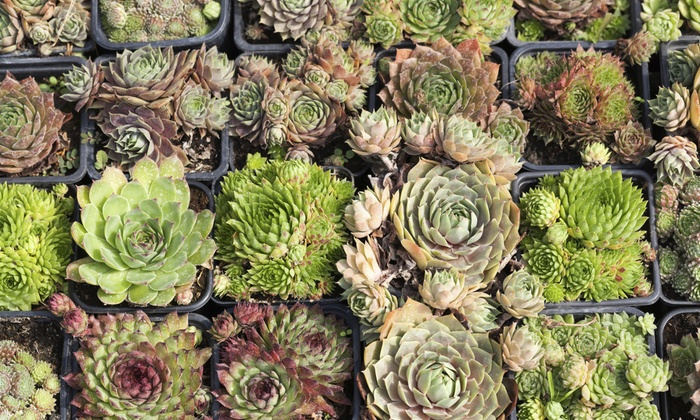 50 Off Garden Supplies Plants At Coulter Gardens Nursery