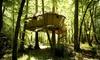 Vallée des singes : 1 à 2 nuits en cabane dans les arbres ou en Lodge