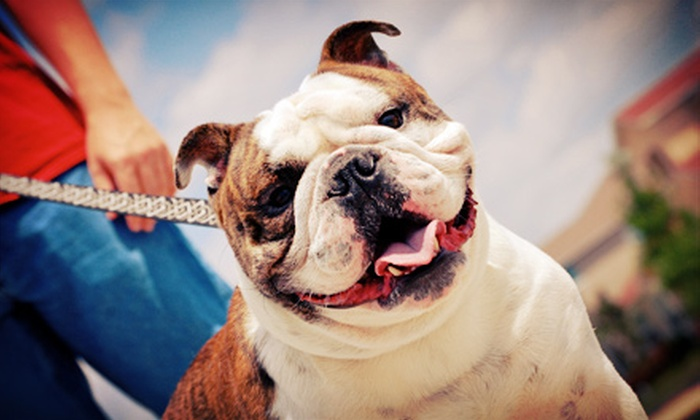 Shake Wag Love - College Park: $25 for $50 Worth of Pet Care from Shake Wag Love