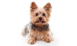 Luxus Studios: Pet Photoshoot with Three Prints at Luxus Studios