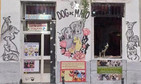 Servicio de guardería canina por jornadas o días completos a elegir entre 4 opciones desde 9,99 € en Dog de Mayo
