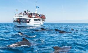 Turmares Tarifa: Excursión en barco con avistamiento de cetáceos para 1, 2, 4, 6 u 8 personas desde 18 € en Turmares Tarifa