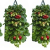 Hanging Strawberry Pouch (1-, 2-, or 3-Pack)