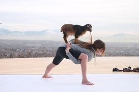 Up to 20% Off Goat Yoga Class at Goga at Goga, plus 6.0% Cash Back from Ebates.