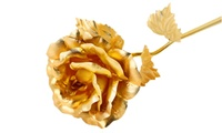 Gold Plated Roses from 49 AED