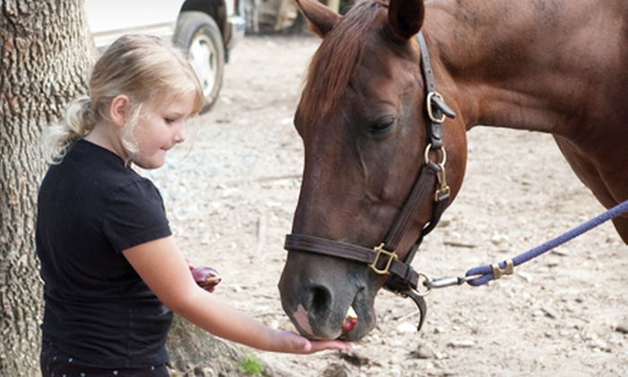 Dead Broke Farm - Raleigh: $275 for a One-Week Horseback-Riding Camp Including Lessons and Trail Rides at Dead Broke Farm ($500 Value)