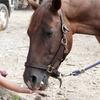 45% Off a Horseback-Riding Camp at Dead Broke Farm