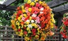 20 or 40 Garden Ready Begonia Illumination Plants