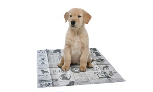 AKC Scented Newspaper-Printed Absorbent Training Pads (100-Count)