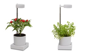 LED Desktop Hydroponics and Grow-Light System