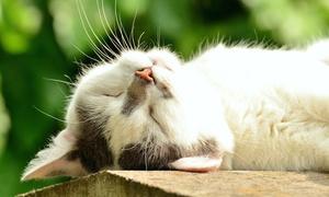 Colonie feline - Life learning: Videocorso sugli aspetti gestionali e legislativi delle colonie feline da Life Learning (sconto 83%)