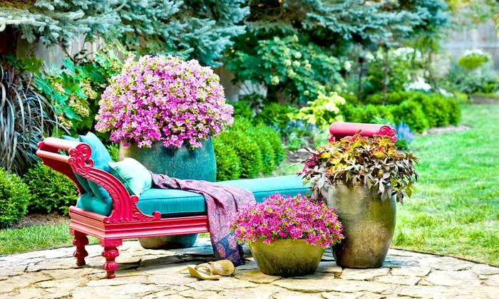 Jardinerie derly groupon for Achat jardinerie