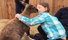 Cobb's Adventure Park & Corn Maze - Northeast Calgary: One-Week Summer Camp for One or Two Children at Cobb's Adventure Park & Corn Maze (Up to 42% Off)