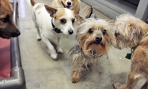 Dog Pawz: 5 or 10 Full Days of Dog Daycare at Dog Pawz (41% Off)