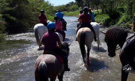 Bono de 2, 4 o 6 paseos a caballo para hasta 6 personas desde 29,95 € en Club Ecuestre Anclades