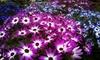 Tom Ridgway Florist - Multiple Locations: $20 for $40 Toward Floral Arrangements at Tom Ridgway Florist