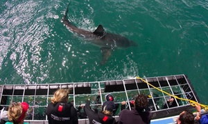 Supreme Sharks: Shark Cage Diving Experience from R999 with Supreme Sharks (Up to 39% Off)