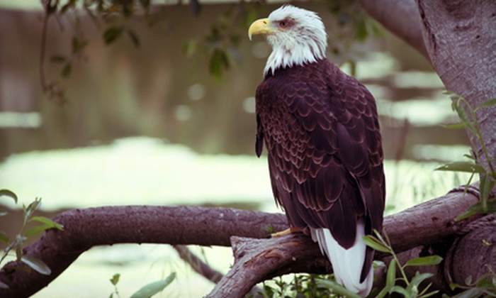 Soaring Eagles Adventures - Augusta: One- or Two-Day Eagle-Watching-and-Canoeing Excursion from Soaring Eagles Adventures in Augusta (Up to 55% Off)