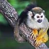 Up to 54% Off at Assiniboine Park Zoo