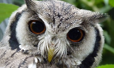 Twilight Owl Experience for Two or Four at Kirkleatham Owl Centre
