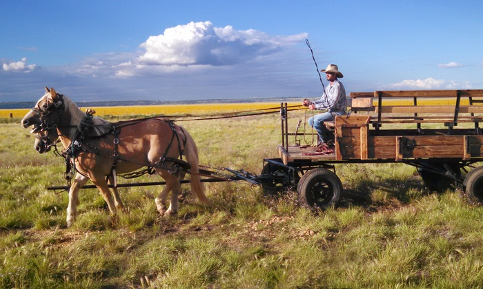 High Mountain Trail Rides - Flagstaff: Mormon Lake Tour in a Horse-Drawn Wagon for Two or Four from High Mountain Trail Rides (Up to 48% Off)