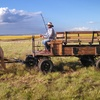 48% Off a Tour in a Horse-Drawn Wagon