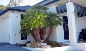 Palmiers nains Vulcano