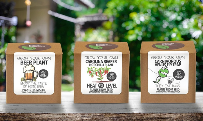 "Groupon Goods Global GmbH: 1 ou 2 kits plante ""Grow Your Own"" pour homme"