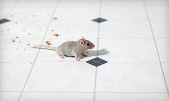 Sound Pest Management - Central Business District: $90 for $180 Worth of Pest-Control Services from Sound Pest Management