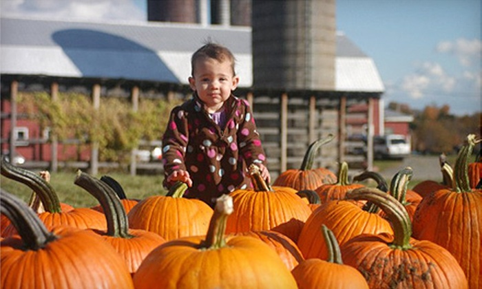 Ellms Family Farm - Ballston Spa: Autumn Activities and Corn Maize Admission for Two or Four to Ellms Family Farm in Ballston Spa
